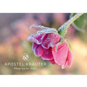 Gutschein-Rose