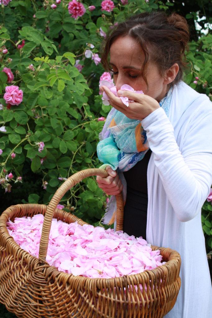 Lisa Cerruti, Geschäftsführerin, bei der Rosenblütenernte - Apostel Kräuter